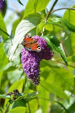 Vlinder van Lisa van Dam