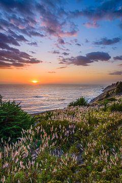 Rietgras bij zonsondergang van Denis Feiner