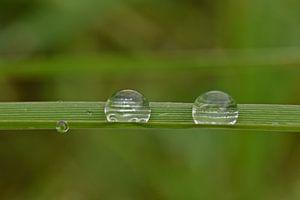 Wassertröpfchen im Gras von Daphne van der straaten