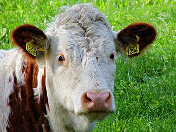 Kuh auf der Weide von Jessica Berendsen