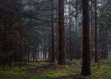 Trees In Line van William Mevissen