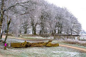 Winterfoto van Quick Fotografie
