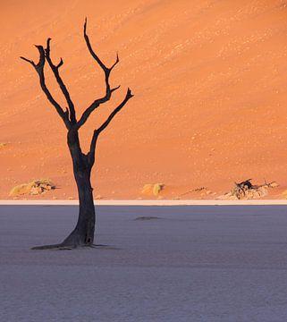 Dode boom in Dead Vlei, Namibië van Christel Nouwens- Lambers