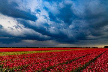 Tulpen im Polder von Studio de Waay