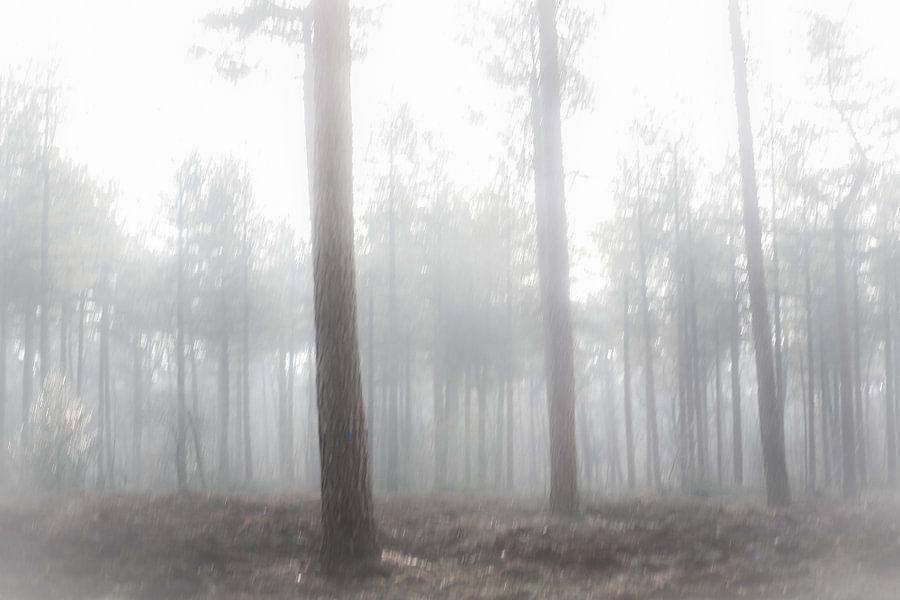 Bomen in de mist van Fotografie Jeronimo