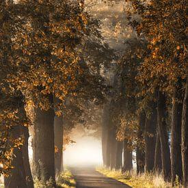Alladins Lane von Lars van de Goor