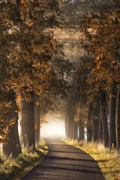 Alladins Lane van Lars van de Goor