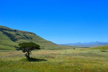 Groen landschap van Dustin Musch