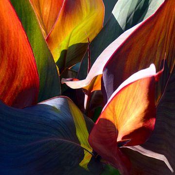 Licht en schaduw von Marijke van Loon