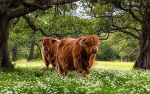 Frühling in den Cairngorms van Em We