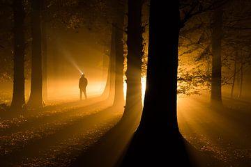 Licht in een donker mistig bos - Roden, Drenthe van Bas Meelker
