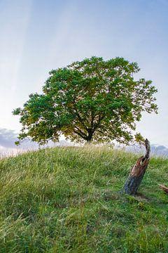 Eenzame boom boven op een berg in susteren (Limburg) van Debbie Kanders