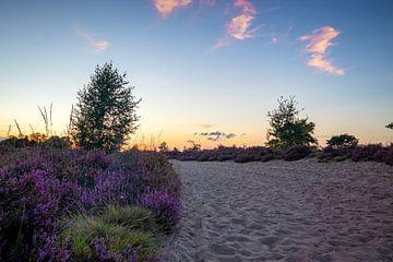 Heide von Johan Mooibroek