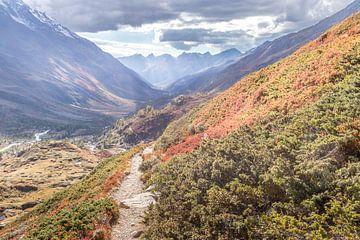 Herbstfarben mit Jakobsleiter im Lötschental. von Ad Van Koppen