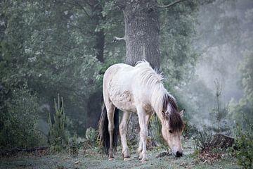 WILDE SCHIMMELPAARD IN HET BOS van Algon Photography