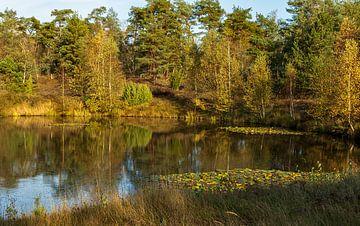 Herbst auf der Veluwe von Carla van Zomeren