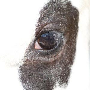 Die koe is niet bang van