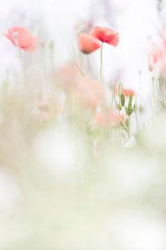 Ruhige Mohnblumen von Bob Daalder