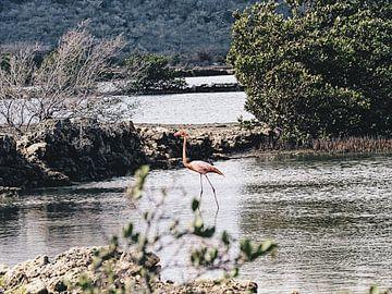 Flamingo van Fleur Kok