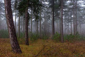 Foggy Forest van William Mevissen