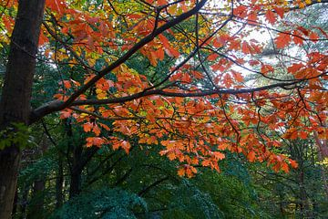 Herfstkleuren op het Leersumseveld van Ad Jekel