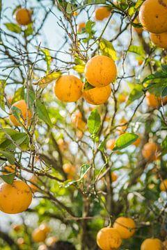 Sinasappels uit de Algarve, Portugal van Antoine Ramakers