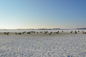 Winter im Polder bei Hedikhuizen von Verrassend Brabant