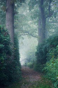 Magische mist in de morgen zo mysterieus van Jacqueline Volders