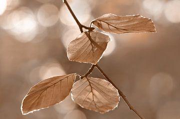 Herbstblätter  von Violetta Honkisz