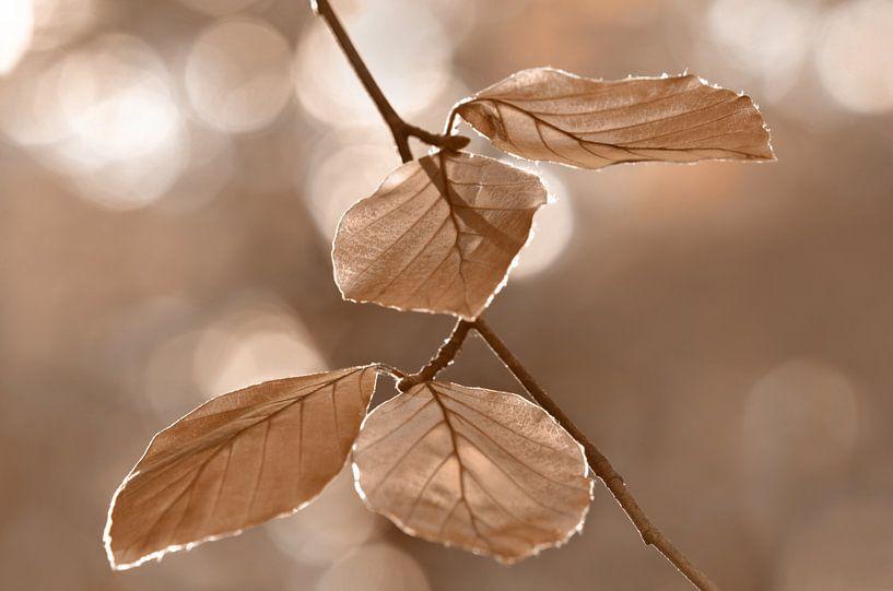 Herbstblätter  van Violetta Honkisz