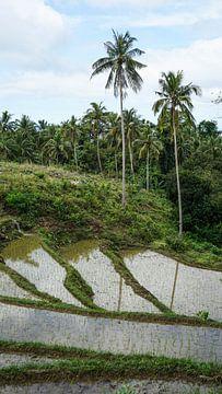 Reisfelder auf Siquijor, Philippinen (vertikal) von Jessica Lokker
