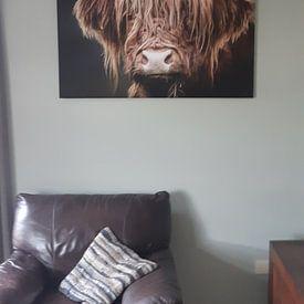 Klantfoto: Schotse Hooglander van Mark van der Walle, op xpozer