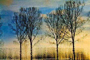 Reflectie van een aantal bomen in het water van Adriana Zoon