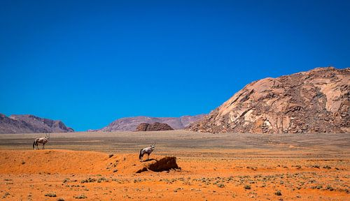 Twee spiesbokken uitkijkend over de Namibwoestijn