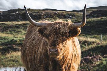 Portret Schotse hooglander gemaakt in Schotland van Yvette de Greef