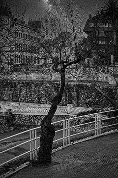 Der Nachtbaum von Faucon Alexis