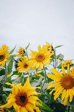 Sommersonnenblumen in der Spätsommersonne in Almere, Niederlande III von Evelien Lodewijks