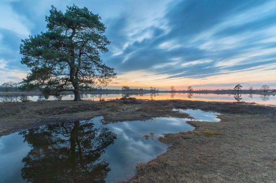 Landschap, boom met weerspiegeling bij zonsondergang