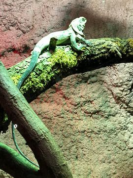 Reptil 5 von tania mol