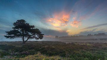 Boom bij zonsopkomst van Jan Linskens