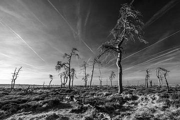 Hohes Venn in Schwarz und Weiß - 1 von Edwin van Wijk
