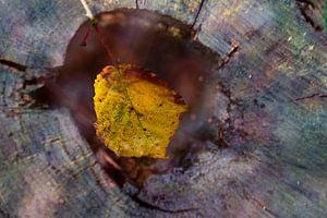 Natur-Kunst 014 von Henk Elshout