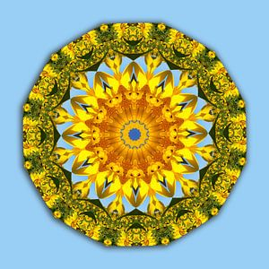 Sunflower, Floral mandala-style, Flower Mandala
