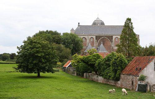 grote kerk veere weliand met schaapjes en boom