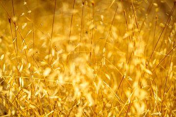 Illuminated Hot Arid Grass van Urban Photo Lab