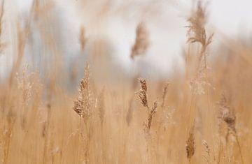 gras van Petra De Jonge