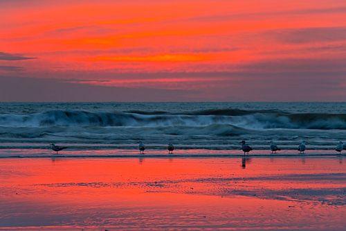 Meeuwen op het strand na zonsondergang van Anton de Zeeuw