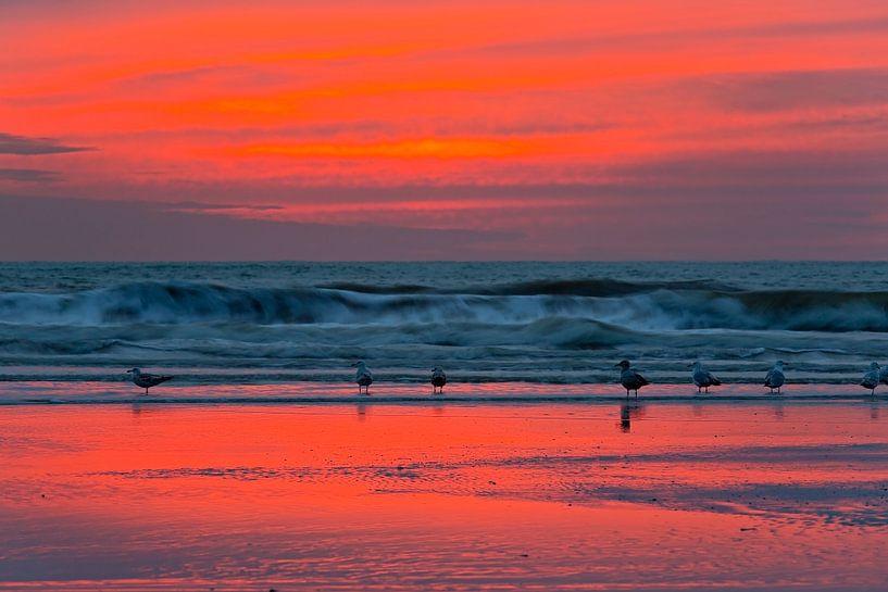 Mouettes sur la plage après le coucher du soleil sur Anton de Zeeuw