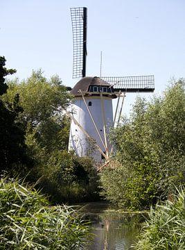 Un petit moulin à vent néerlandais le long d'un étang avec des plantes vertes à Schiedam aux Pays-Ba sur N. Rotteveel
