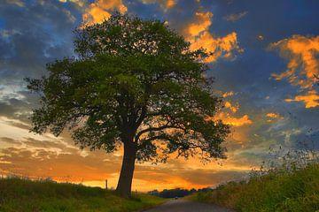 Boom bij zonsondergang van peterheinspictures